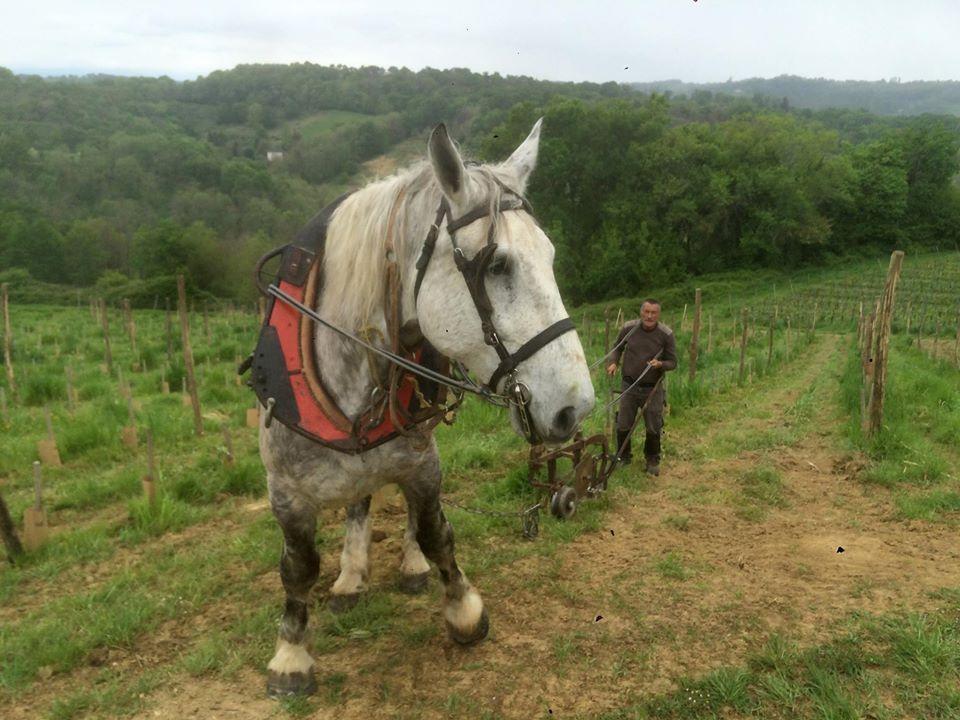 cheval vignes chateau lafitte